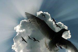birds-flying-under-cloud