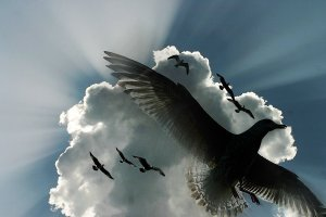 birds-flying-under-cloud